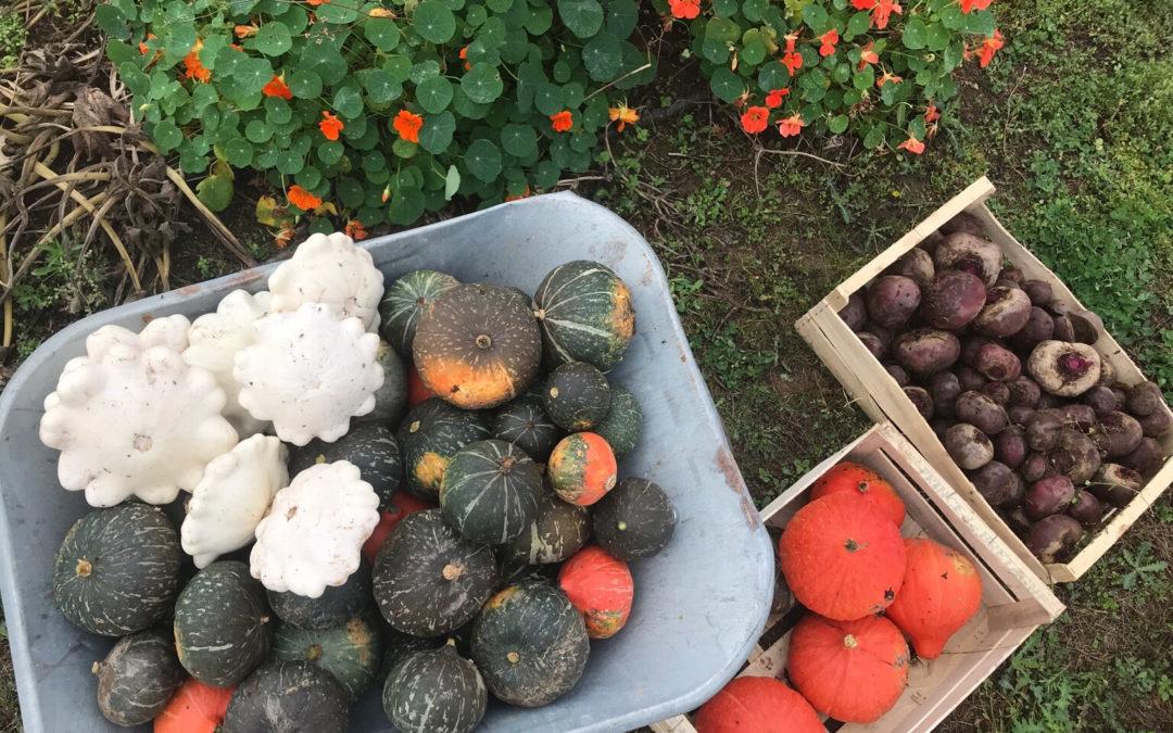 Nous vendons nos premiers légumes