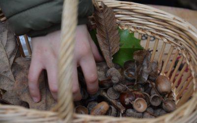Les premiers ateliers nature dans la forêt